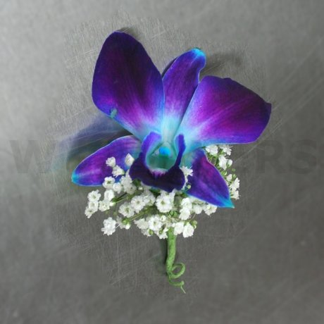 W Flowers product: Blue Orchid Boutonniere