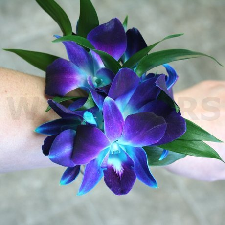 W Flowers product: Blue Orchids wrist corsage