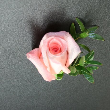 W Flowers product: Boutonniere with Peach Rose