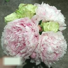 W Flowers product category: Bridal Bouquet with Peonies and Green Roses