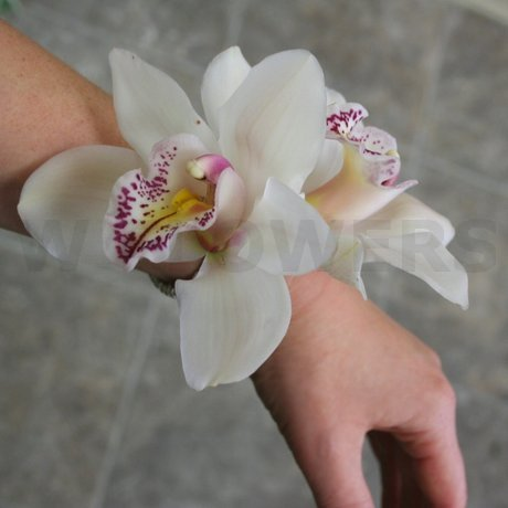 W Flowers product: Cymbidium Orchids Corsage