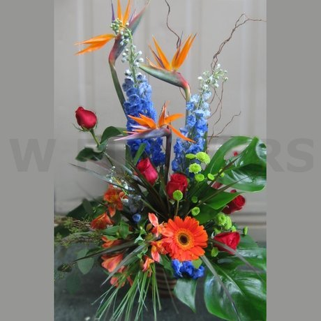 W Flowers product: Exotic Burst