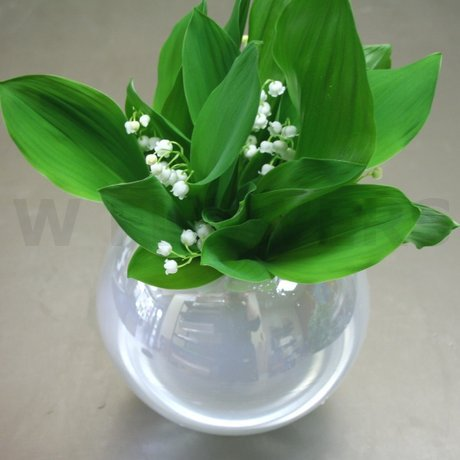 W Flowers product: Lily of the Valley Centerpiece