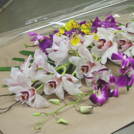 W Flowers product: Only Orchids