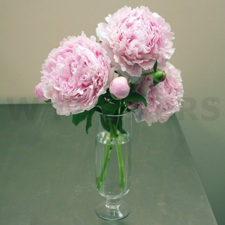 W Flowers product: Peonies Centerpiece