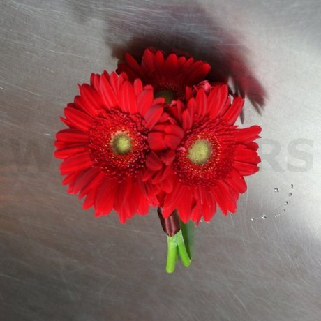 W Flowers product: Red Gerbera Bridesmaid Bouquet