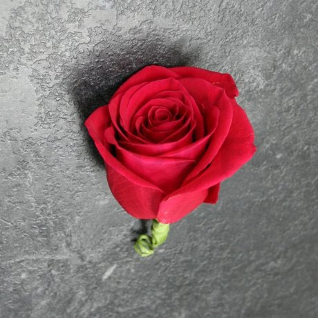 W Flowers product: Red rose boutonniere