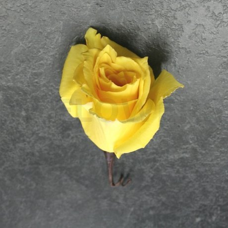 W Flowers product: Rose Boutonniere