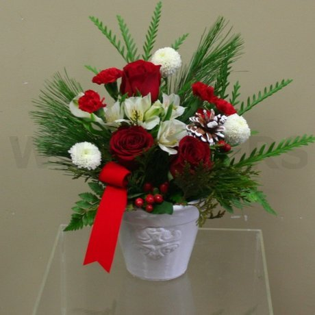 W Flowers product: Winter roses in a Pot