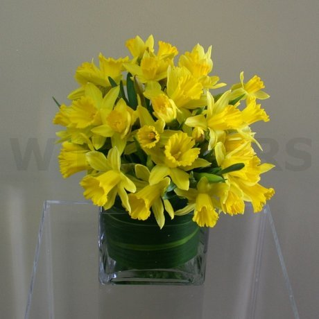 W Flowers product: Spring Sunshine