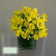 W Flowers product category: Spring Sunshine