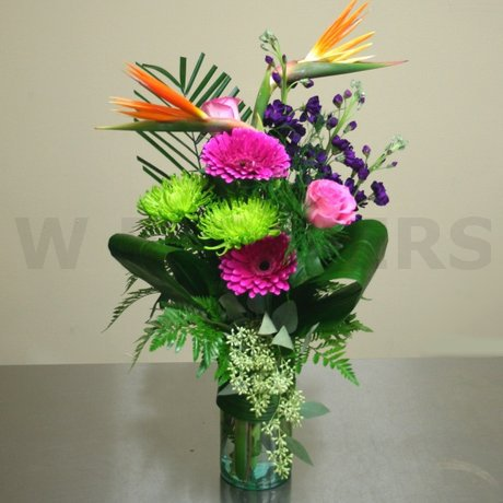 W Flowers product: Tropical Birds
