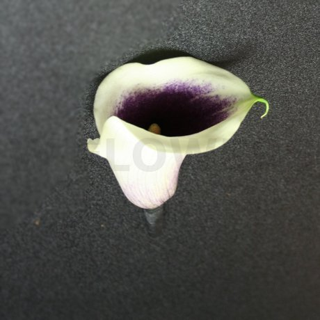 W Flowers product: White and Purple Calla Boutonniere