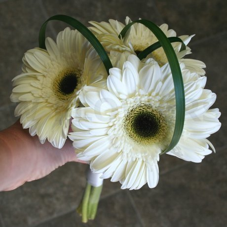 W Flowers product: White Gerbera Bridesmaid Bouquet