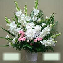 W Flowers product category: