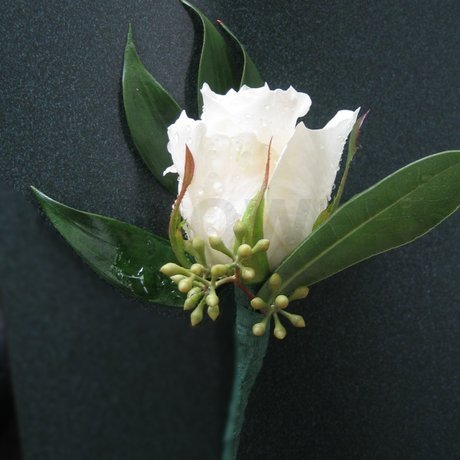 W Flowers product: White Rose Boutonniere