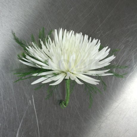 W Flowers product: White Spider Mum Boutonniere